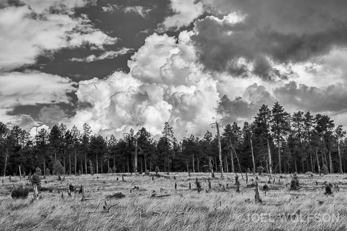 "I sometimes take my workshop participants to the sites of old fires because of the nice juxtaposition of the snags and new growth. It's especially nice for black and white. This was also during our rainy (""monsoon"") season. The clouds started building earlier in the day than usual so I was treated to some really nice clouds in the sky that"